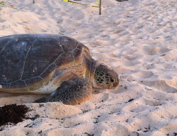 banner-turtle-season-1