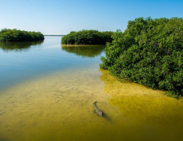 Crocodiles-at-the-Sian-Kaan-Biosphere