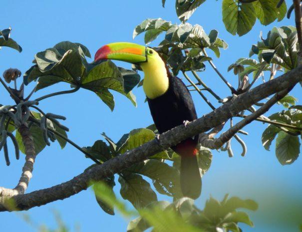 private-bird-watching-in-cancun-555593